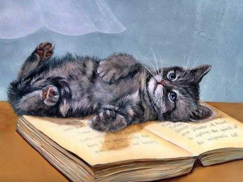 gato-sobre-libro