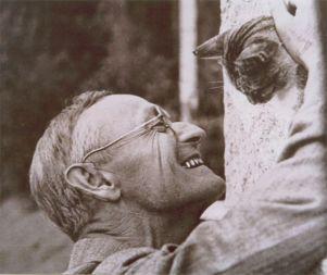 Hesse gato