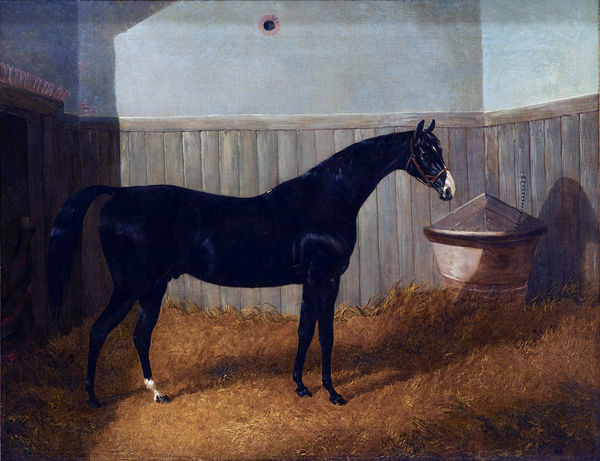 a-black-thoroughbred-horse-in-a-stable-by-john-frederick-herring-john-frederick-herring-jnr-1815-1907.jpg